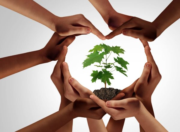 Diverse hands in circle around a tree