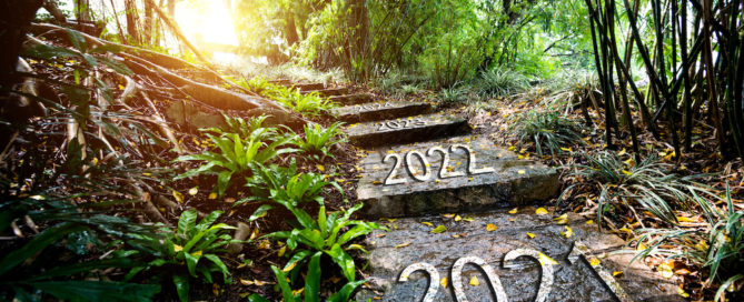 forest path with steps saying 2021, 2022, etc.