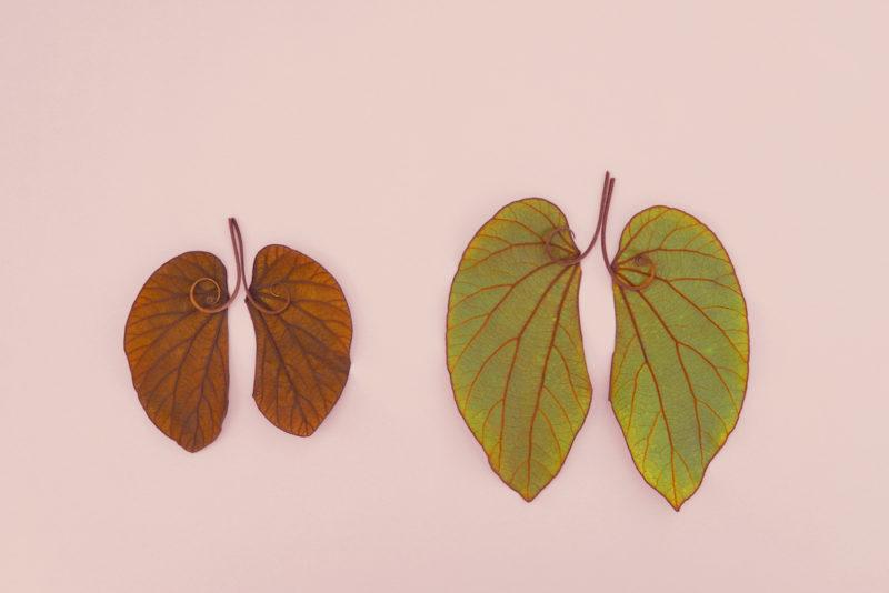 leaf lungs